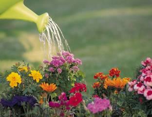 APM-Flowers-image
